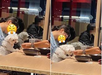 顧客拿「餐廳湯匙」餵狗 網一看全吐了:誰還敢用