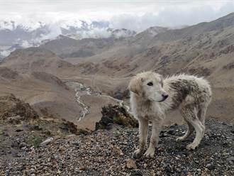 深山內傳出悲鳴聲誤以為狼嚎 登山客一搜驚見骷髏狗