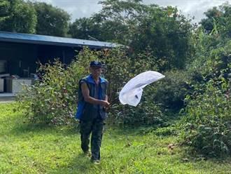 蝴蝶標放體驗 蝴蝶翅膀破損靠「三秒膠、樹葉」修復