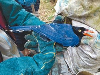 盜賣保育動物 3嫌聲押獲准