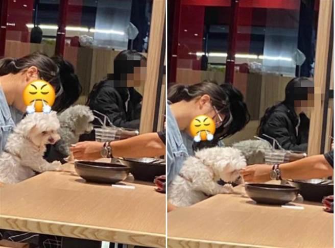客人直接使用餐廳的餐具餵狗,讓許多養狗民眾也無法接受(圖翻攝自/爆怨2公社)
