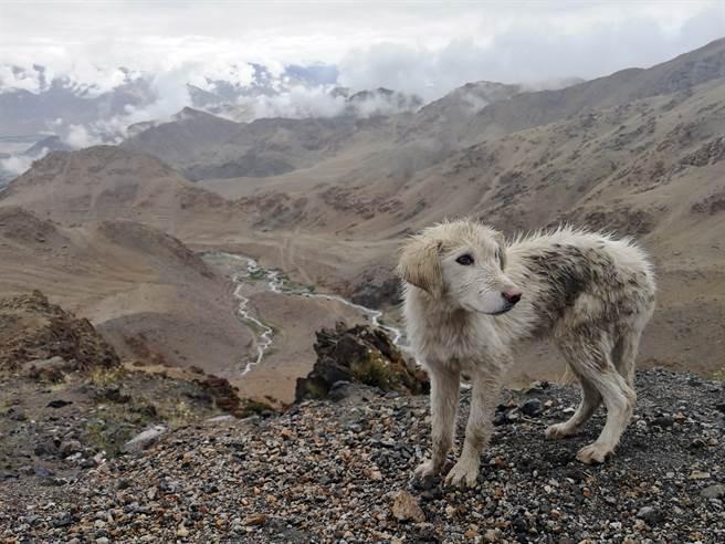 登山客爬山聽到悲鳴聲,當時被村民誤認是狼嚎,豈料意外找到失蹤的狗(示意圖/達志影像)