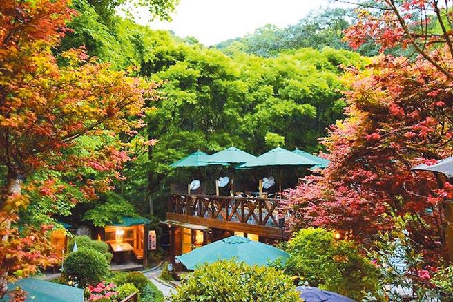 台北奧萬大樂活山莊園區內的樹葉轉紅,景色絕美。(台北奧萬大提供)