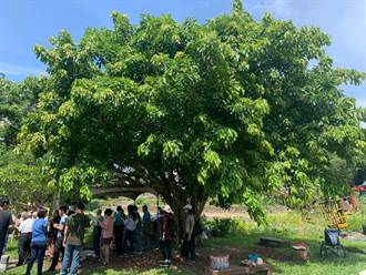 台北首辦 樹木修剪武林大會