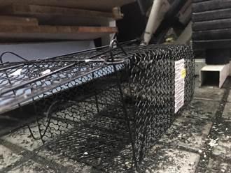 基隆市中心商圈餐飲密集引鼠患 議員盼下水道設置截堵設施