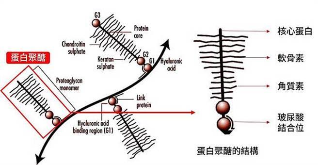 蛋白聚醣成分結構。(圖/微笑藥師網提供)