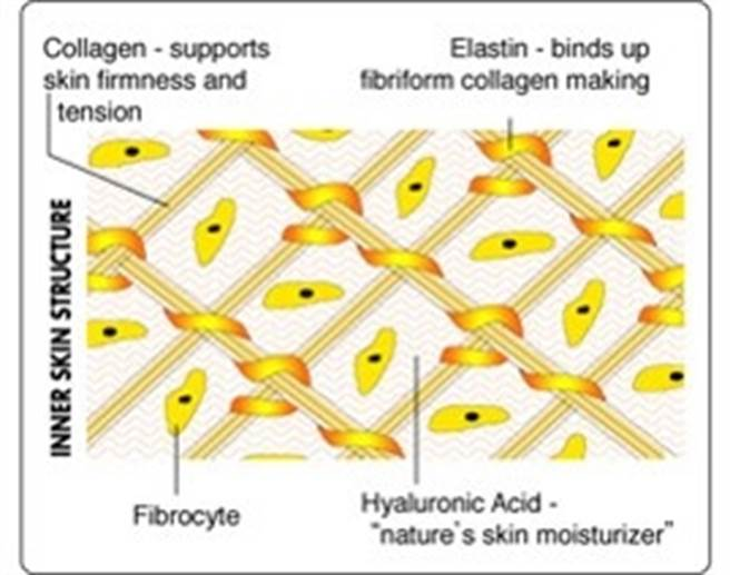 蛋白聚醣、軟骨素、膠原蛋白成分結構。(圖/微笑藥師網提供)