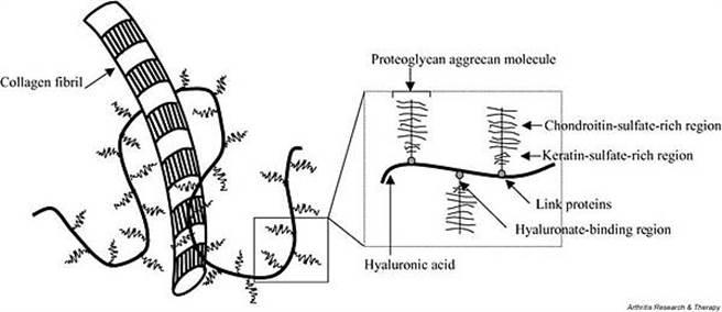 膠原蛋白、玻尿酸、蛋白聚醣、軟骨素、角質素的差別。(圖/微笑藥師網提供)