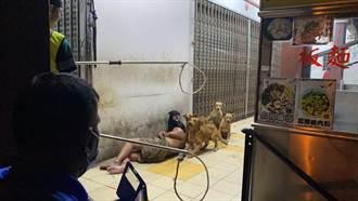 惹人心疼!5流浪狗被圍捕 竟護遊民主人不逃跑