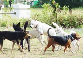 名字被當作狗名 他遭鄰居嗆「我養的狗」怒提告!判決曝光