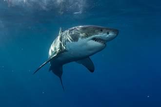 海邊玩耍見鯊魚受困 11歲女淡定救援