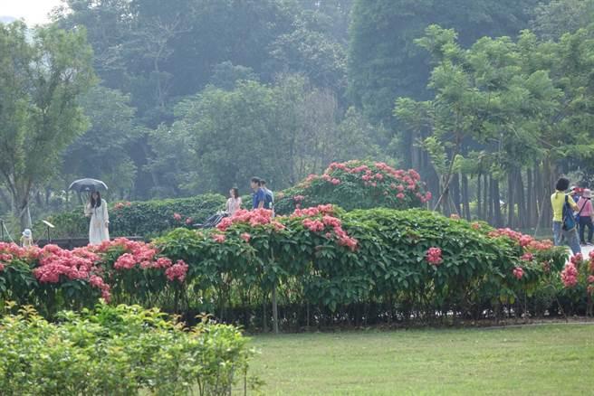 占地20公頃的山上花園水道博物館,植栽生態豐富,開園以來,園區一直擴充花園元素。(台南市文化局提供/劉秀芬台南傳真)