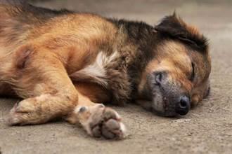 爱犬见玩伴去世被埋 跳入坑用爪挖出尸不愿离开