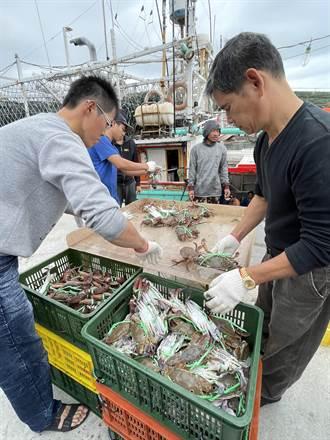 遊北海岸 品嚐新北萬里蟹正是時候