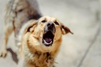愛犬突對插座狂吠 下秒竄出火光 飼主感動:牠救了全家