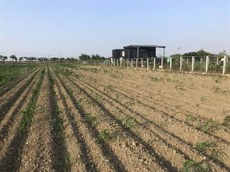 嘉南地區一期作停灌 農民:盡快改善農水路