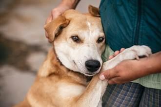 愛犬被偷慘淪「繁殖犬」 6年後重逢結局催淚