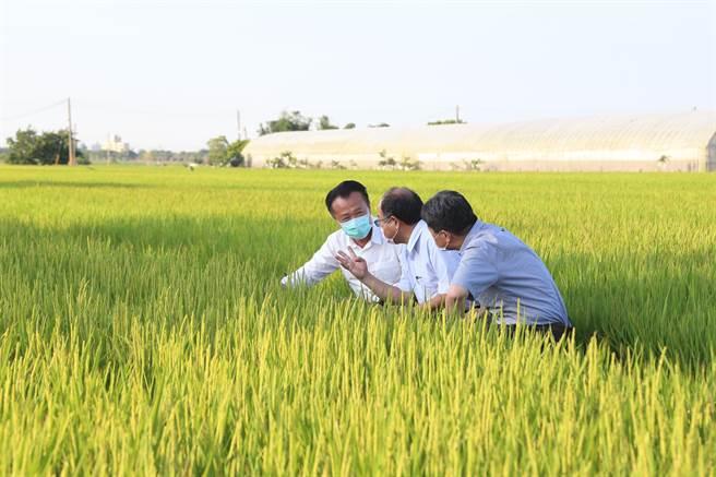 農委會今25日宣布嘉南地區110年第一期稻作停灌,嘉義縣受影響面積近8000公頃。(嘉義縣政府提供∕呂妍庭嘉義報導)