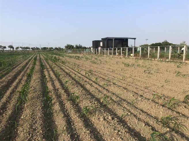 農委會25日宣布,嘉南地區一期稻區將停灌。(南市府農業局提供/李宜杰台南傳真)