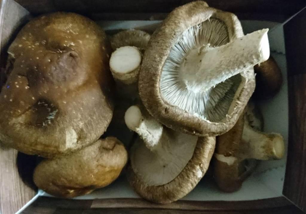 當菇體開始發黑就是不新鮮。如果除了發黑還變得潮濕、出水,就別再食用。(圖/中時資料照片)