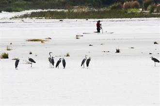 沙灘車闖入國家級濕地 轟隆隆嚇壞罕見白額雁