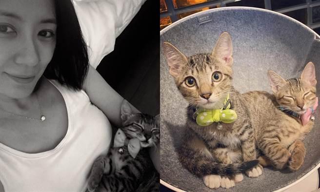 賈靜雯飼養的兩隻貓。(圖/FB@賈靜雯)