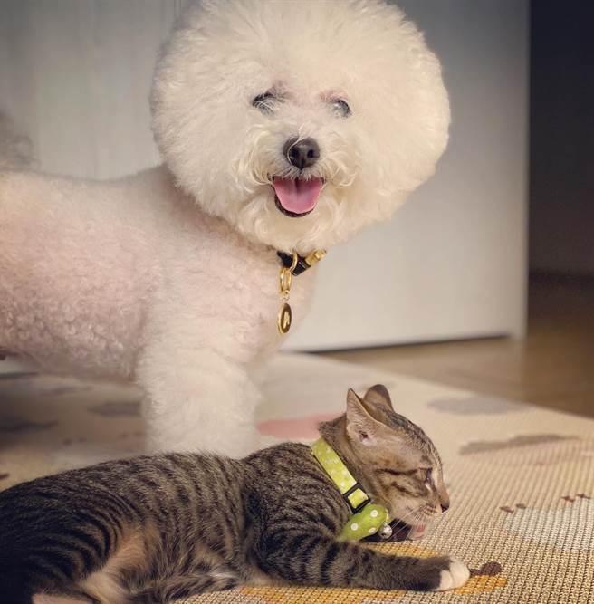 愛犬miu miu與貓咪和平相處。(圖/FB@賈靜雯)