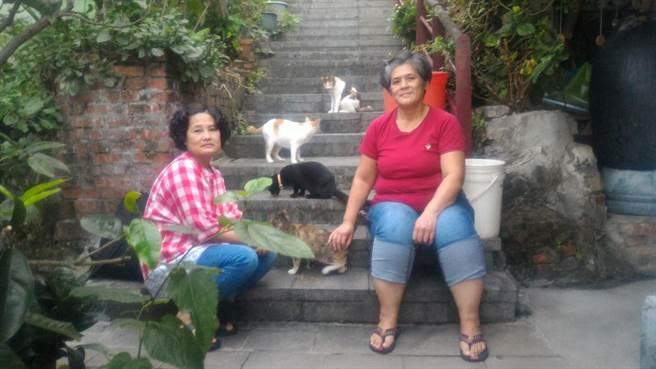 瑞芳內有為數不少的浪貓自由生活著。(新北市動保處/吳康瑋新北報導)