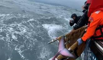 救援成功! 新北擱淺鯨豚順利重返大海