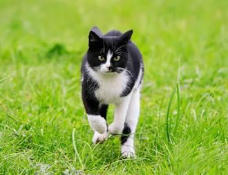 帮猫装追踪器 饲主一看行踪秒傻眼:牠另有5个家