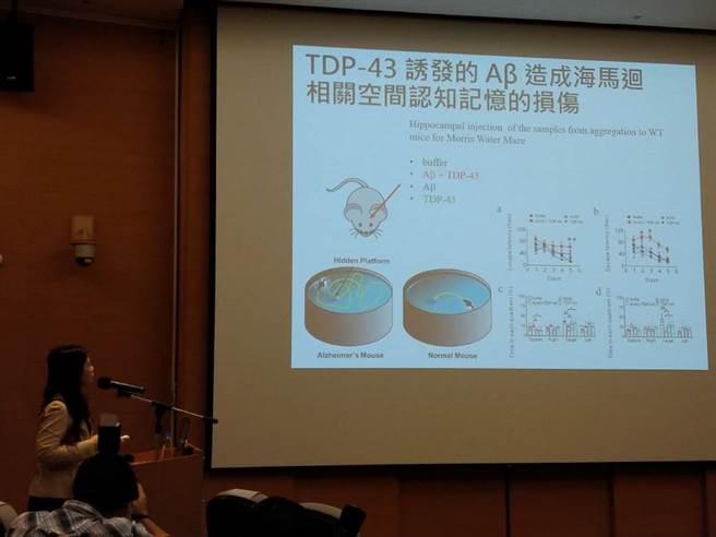 陳韻如表示,從小鼠實驗中可得知,TDP-43會使阿茲海默症惡化約2倍。(圖/梁惠明攝)