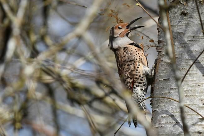 遇見鳥兒,如果肯停下腳步多看幾眼,故事可能就完全不一樣了。(圖/張伯權攝)
