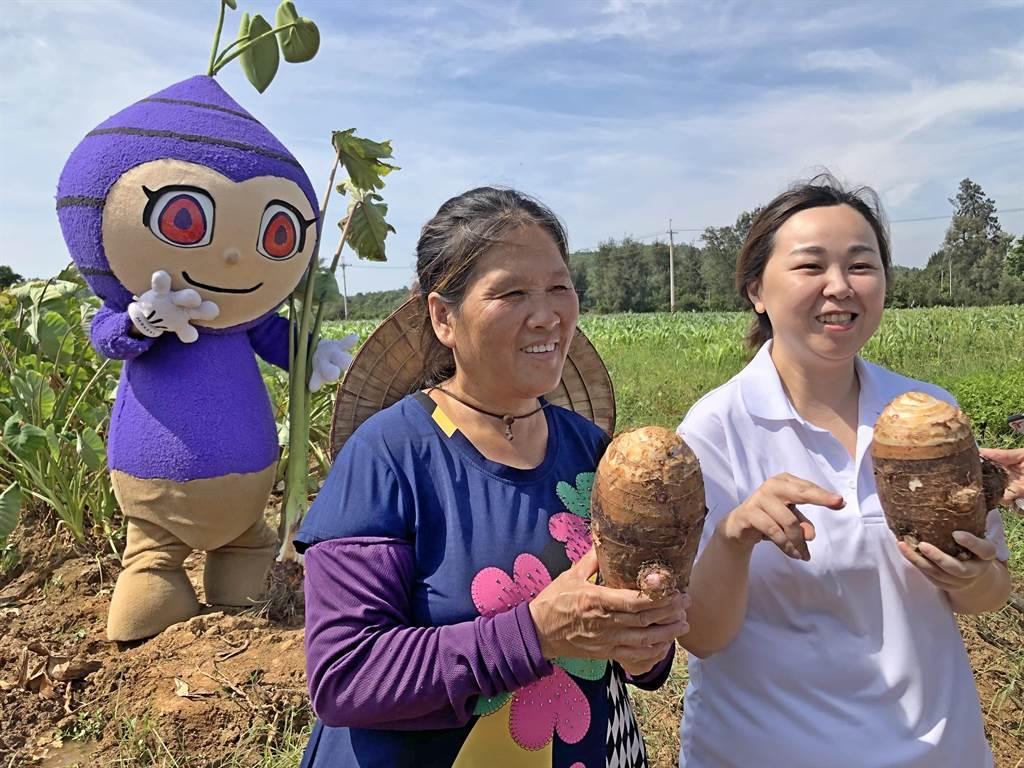 小金門芋頭以香濃綿密出名,廣受鄉親和遊客歡迎。(中時資料照片/李金生攝)