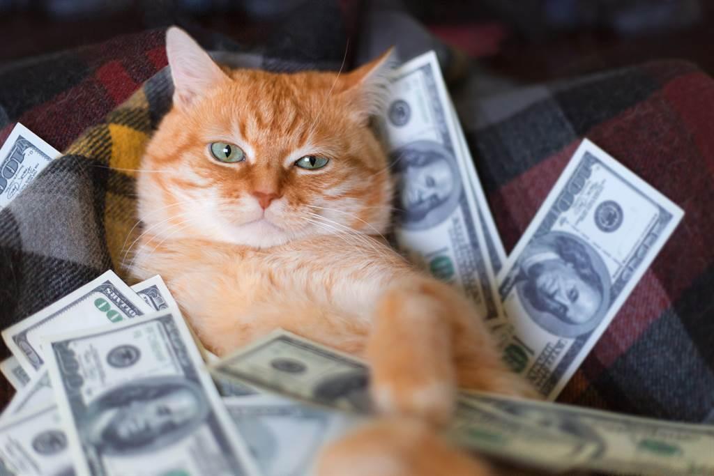人妻發現愛貓一直盯著樓梯扶手,低頭一看竟發現一疊鈔票(示意圖/達志影像)