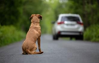狗被棄養趴長椅傻等主人來接 身旁一張紙條眾人鼻酸