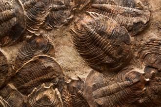 5亿年前霸主被命名「范特西虫」 科学家嗨翻:向周杰伦致敬
