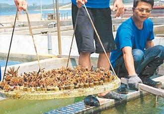 珊瑚培育桶獲專利證書