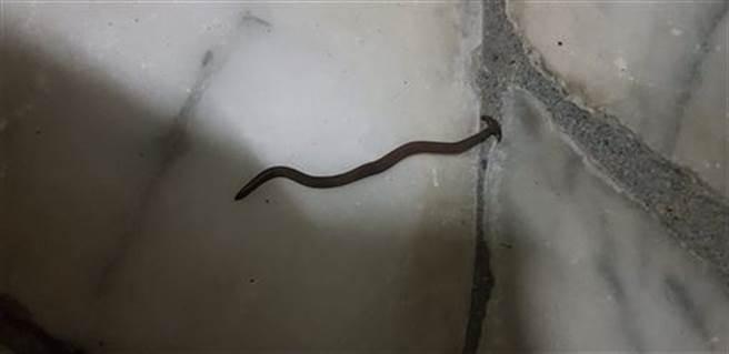 網友在家中發現看似「發霉金針菇」的生物,後來才知道是「渦蟲」。(圖/翻攝自臉書社團「宜蘭知識+」)
