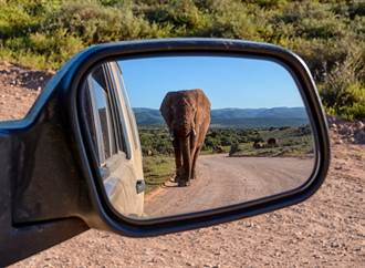 叭一聲惹怒大象 倒楣小車遭誤認追擊!火速逃亡