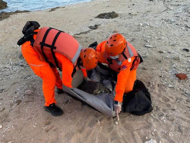 海巡人員28日下午,陸續在屏東縣後壁湖餵魚區岸際發現3隻死亡海龜。(海巡署第八巡防區提供/潘建志屏東傳真)