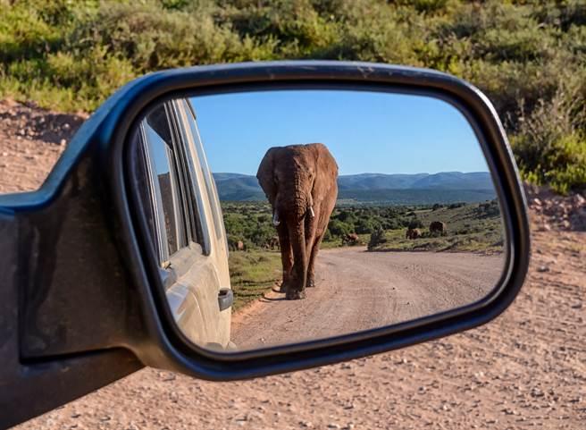 大象被喇叭聲和快速行駛的車輛嚇到,竟開始追擊無辜車輛(示意圖/達志影像)