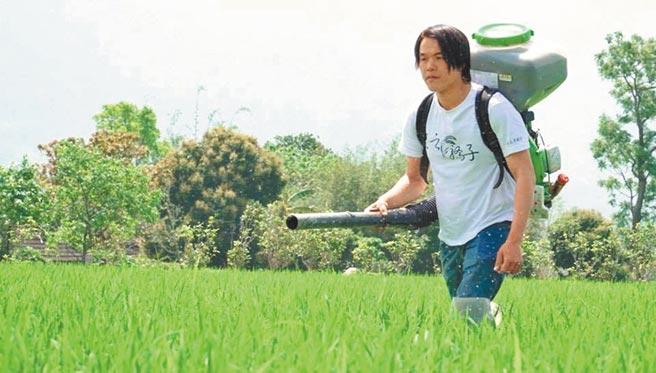 台東池上青農魏瑞廷在田中作業。(本報資料照片)