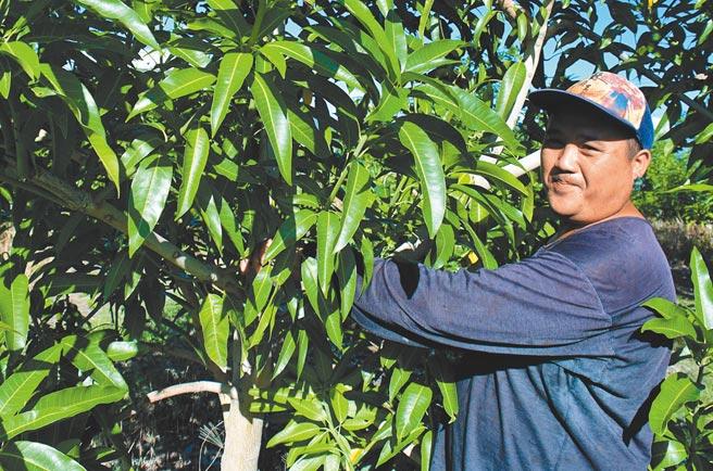 台東青農曾永忠說,務農很辛苦又賺不到錢,至今不敢討老婆。(莊哲權攝)