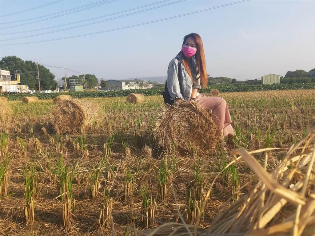 成捆乾稻草堆置田間,充滿田園風情,吸引民眾前來拍照打卡。(田中鎮公所提供/謝瓊雲彰化傳真)