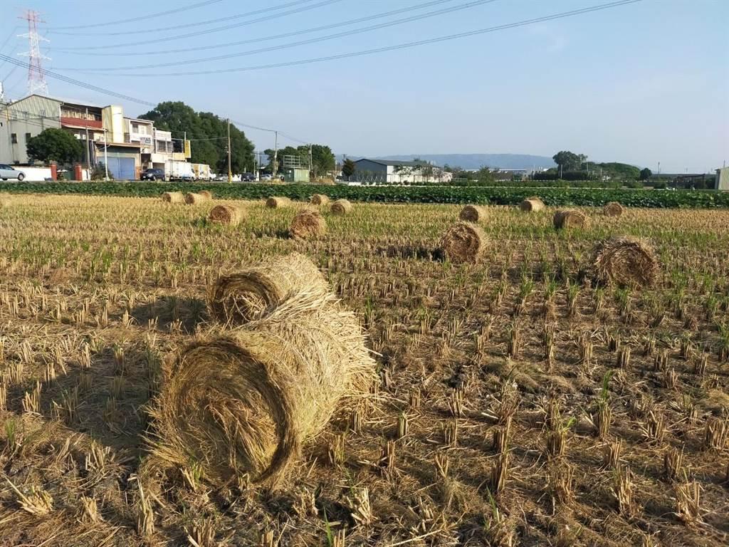 成捆乾稻草堆置田間,充滿田園風情。(田中鎮公所提供/謝瓊雲彰化傳真)