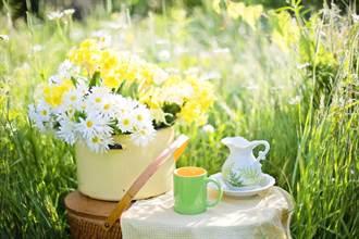 研究:這類人多喝綠茶、咖啡 可降早期死亡風險