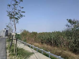 北港溪河床銀合歡入侵 河川局配合綠美化遏止蔓延