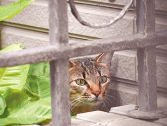 新故鄉動員令》人貓共存的幸福樂園