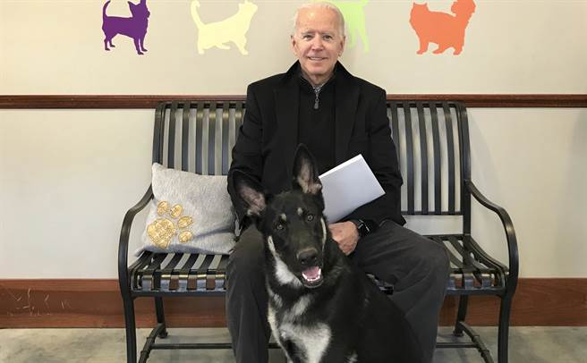 美國總統當選人拜登2018年11月16日在德拉瓦州人道協會(Delaware Humane Association),和當時剛領養的德國牧羊犬「少校」合照。(美聯社)