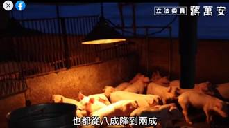 蔣萬安反擊蘇貞昌 公布下鄉影片 宅神憂:這家豬農慘了